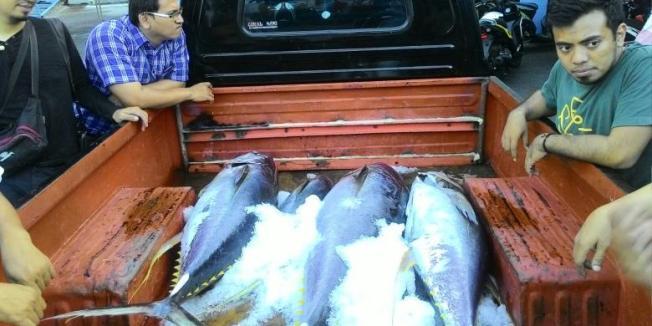 dk-68a-1-1-ekspor tuna melambung